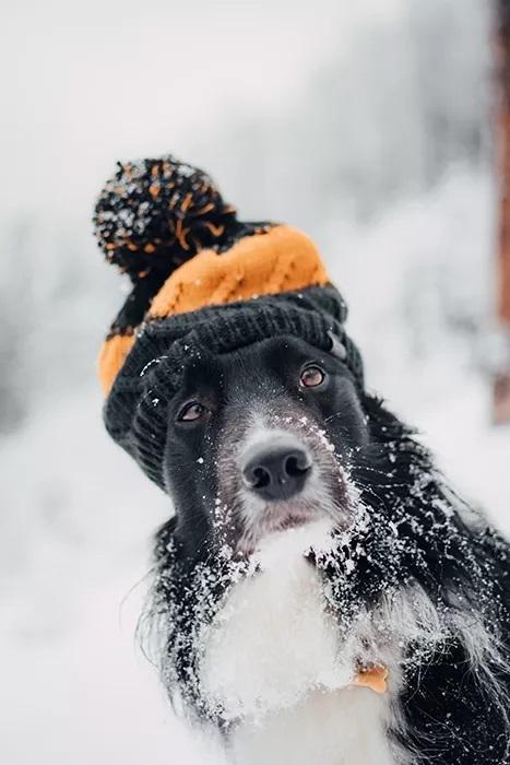 پرتره شایان ستایش یک کولی مرزی در برف - ایده های عکاسی زمستان