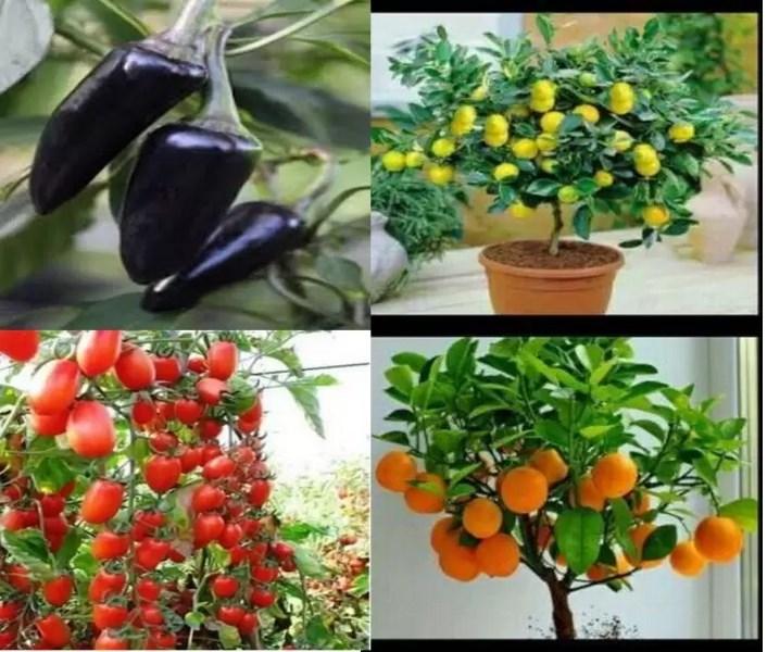 پرورش گیاهان خوراکی در منزل