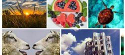 8 تا از بهترین وب سایت ها برای دانلود عکس های رایگان