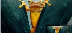 دانلود ۱۰۰ تصویر پس زمینه از حیوانات وحشی و زیبا